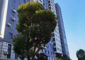 桥东工业园 海兴大厦 12楼 80.56平 2房2厅 毛坯房售28.8万