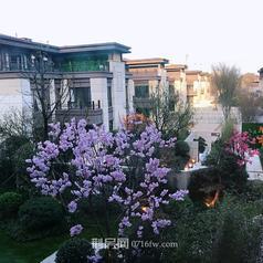荆州荆州海洋世界海墅湾(别墅)实景图
