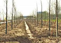 公安县这项重点民生工程有望4月上旬完工!