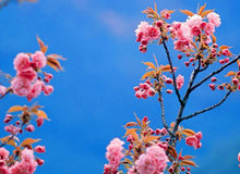 春暖花开买房时!品质楼盘特发幸福里别错过